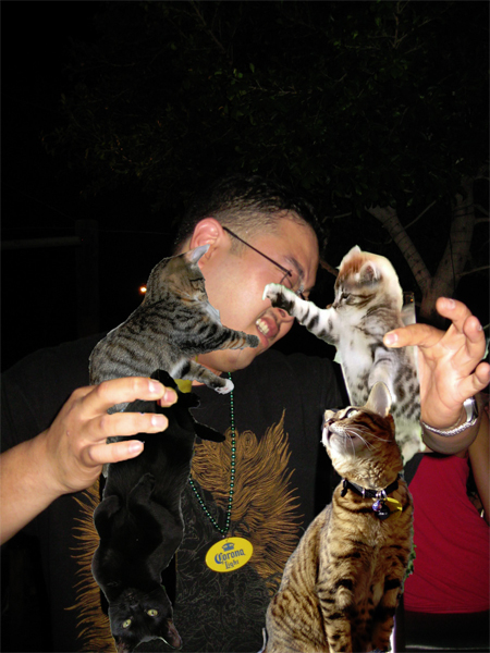 maybe they just want his beads?  the boozecats don't have anything to flash him. how are they supposed to get beads?  this is why boozecats also hate mardis gras